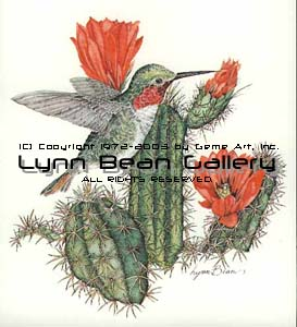Anna's Hummingbird with Cactus.