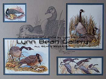 WATERFOWL Remarque 18x24 01.